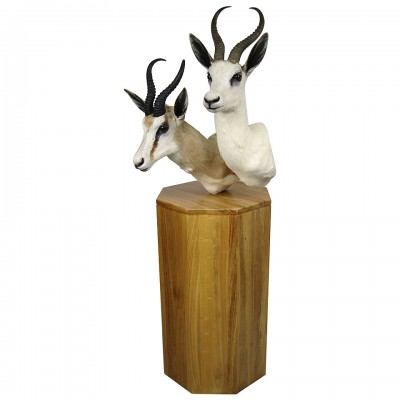 Double African Antelope and African Blonde Blesbok Taxidermy Mounted on Base